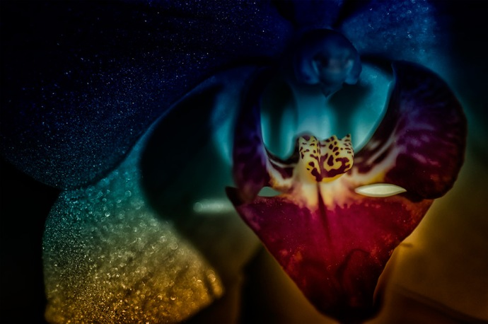 Glitter-Galaxy - Abstract Moth Orchid