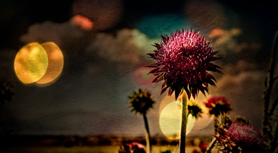 Thistle - Abstract Thistle and Landscape