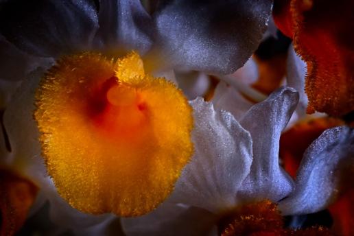 Orchidelirium: Degas in the Garden