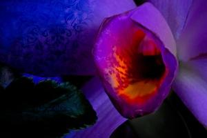 Orchidelirium: Satisfaction