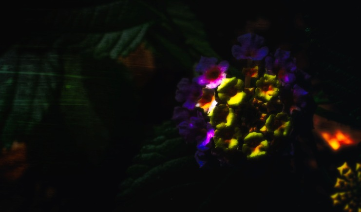 In the Garden of Earthly Delights: Abstract Lantana Camara