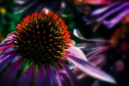 Pinhead: Abstract Coneflower