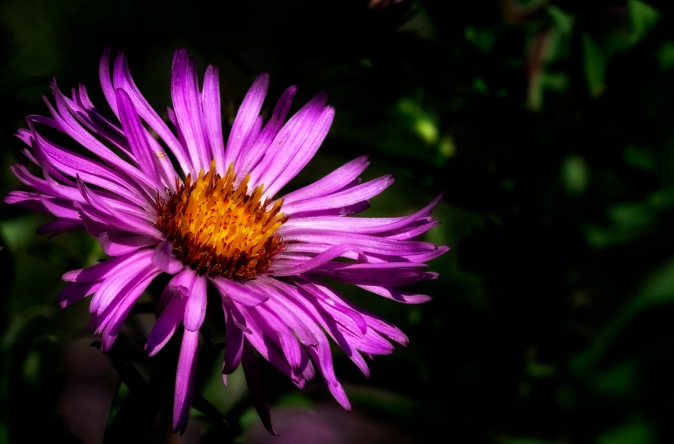 Summer of Love: Macro Aster