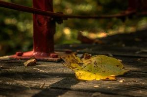 Transition - Autumn Leaf on Bridge
