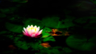 Midsummer Night - Abstract Water Lily