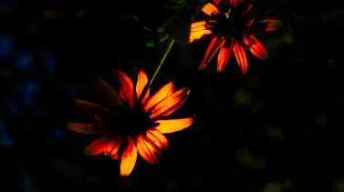 Mabon: Abstract Daisies