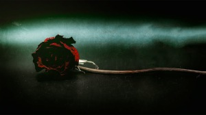 Rosaceae: A Rose for Emily
