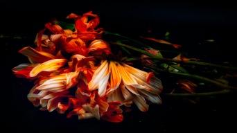Act V, Scene II: Abstract Flowers