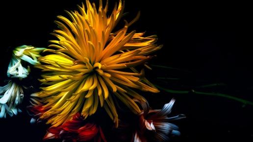Anemone: Abstract Macro Flowers