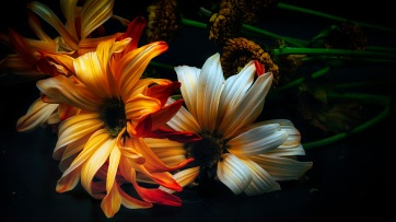 Baroque: Abstract Daisies