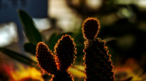 Sticky and Floppy - abstract cacti