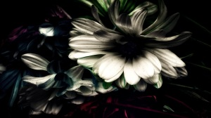 Underworld: Abstract Daisies