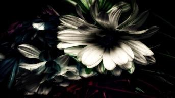 Underworld: Abstract Daisies