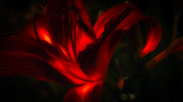 The Marriage of Heaven and Hell: Abstract Daylily