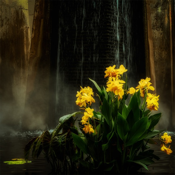The Lilies of Mordor - water lilies by waterfall