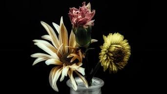Trinity - macro flowers